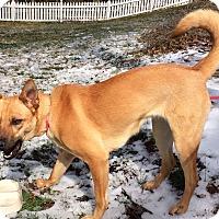 Adopt A Pet :: Bianca (fostered in NC) - Cranston, RI