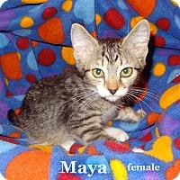 Adopt A Pet :: Maya - Bentonville, AR