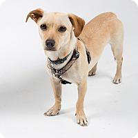Adopt A Pet :: Dickens - Santa Barbara, CA