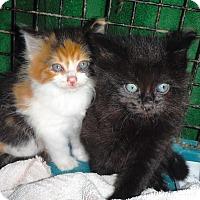Adopt A Pet :: Emmie - Richfield, OH