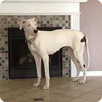 Adopt A Pet :: Lexi - O'Fallon, MO