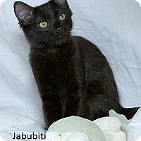 Adopt A Pet :: Jabubiti F - Sacramento, CA