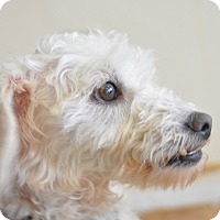 Adopt A Pet :: Noel - Tumwater, WA