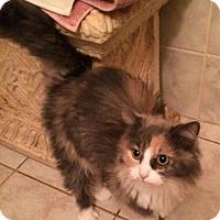 Adopt A Pet :: Boo Boo - Hamilton, ON