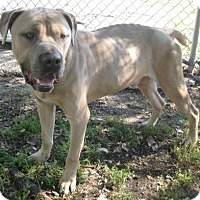 Adopt A Pet :: Chance - Gary, IN