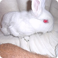 Adopt A Pet :: Pearl - Maple Shade, NJ