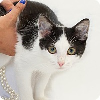 Adopt A Pet :: Snickers - Schererville, IN