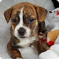 Adopt A Pet :: Mabel - Manhattan, NY