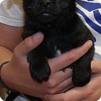 Adopt A Pet :: OLLIE - Corona, CA