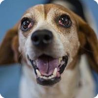 Adopt A Pet :: Hosanna - Bradenton, FL
