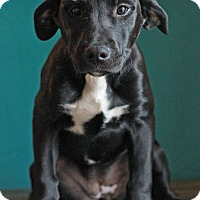 Adopt A Pet :: Gracie - Waldorf, MD