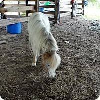 Adopt A Pet :: Spirit - Okeechobee, FL