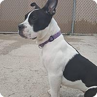 Adopt A Pet :: Ryker - West Allis, WI