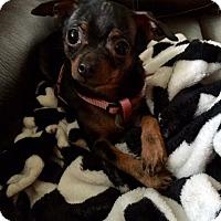 Adopt A Pet :: Mia - Vacaville, CA
