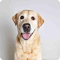 Adopt A Pet :: DUDLEY - Murray, UT