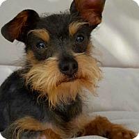 Adopt A Pet :: Jackpot - Thousand Oaks, CA