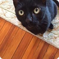 Adopt A Pet :: Blu - Philadelphia, PA