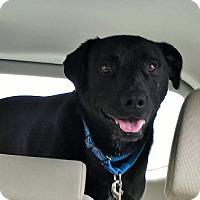 Adopt A Pet :: Sadie #5 - Towson, MD