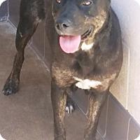 Adopt A Pet :: Jessie - Las Vegas, NV