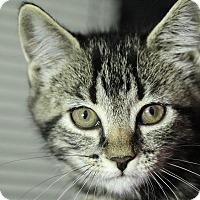 Adopt A Pet :: Ramona - Sarasota, FL