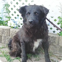 Adopt A Pet :: Xandria - West Chicago, IL