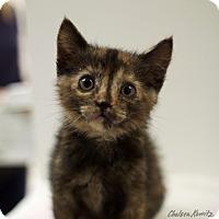Adopt A Pet :: Adelaide - Los Angeles, CA