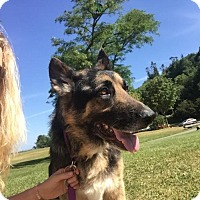 Adopt A Pet :: Lance - Seattle, WA