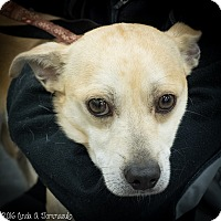 Adopt A Pet :: Johnnie - Loudonville, NY