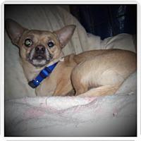 Adopt A Pet :: KIRKO - Medford, WI