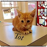 Adopt A Pet :: Tot - Dillon, SC