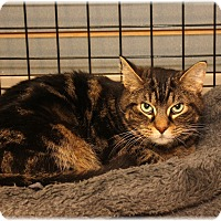 Adopt A Pet :: Mika - Welland, ON