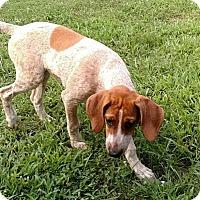 Adopt A Pet :: Panini - Atlanta, GA