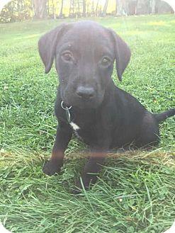 Terrier (Unknown Type, Small) Mix Dog for adoption in Thompson, Pennsylvania - Omni