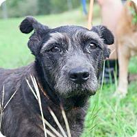 Adopt A Pet :: Luna - New York, NY