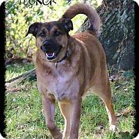 Adopt A Pet :: Tucker - Shippenville, PA
