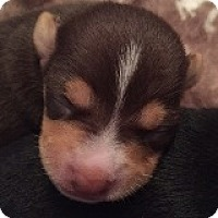 Adopt A Pet :: Mac McIntosh - Houston, TX