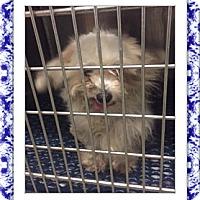 Adopt A Pet :: Monkey - IL - Tulsa, OK