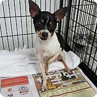 Adopt A Pet :: Rio - Bernardston, MA