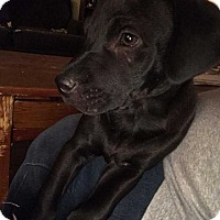 Dachshund Mix Dog for adoption in E. Greenwhich, Rhode Island - Molly
