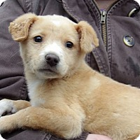 Adopt A Pet :: Ooma (8 lb) - West Sand Lake, NY