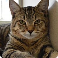 Adopt A Pet :: SAMMY - I'm arrogant - DeLand, FL