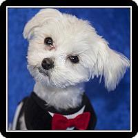 Adopt A Pet :: Dusty - Covina, CA