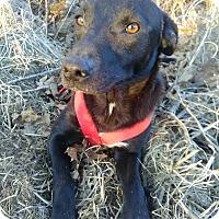 Adopt A Pet :: Jaci - Springfield, MO