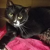 Adopt A Pet :: Evie - Washington, VA