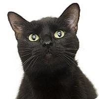Adopt A Pet :: Sophia - Adrian, MI