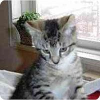 Adopt A Pet :: Tippy - Island Park, NY