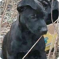 Adopt A Pet :: Lipton - Roseville, MI