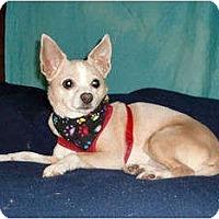 Adopt A Pet :: Corey - Mooy, AL