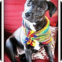 Adopt A Pet :: Bernie - Pascagoula, MS