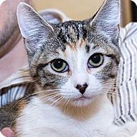 Adopt A Pet :: Lola - Irvine, CA